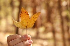 Żółty jesień liść w ręce Fotografia Stock
