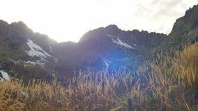 Żółty jesieni trawy kiwanie w wiatrze, śnieżni wierzchołki z pięknym obiektywem migocze zdjęcie wideo