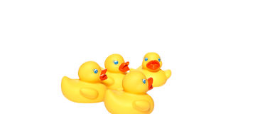 Żółty kaczki dopłynięcie Obrazy Stock
