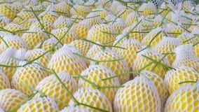 Żółty kantalup zdjęcia stock