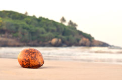 Żółty koks na egzot plaży Obraz Stock