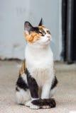 Żółty kot Obrazy Stock