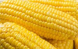 Żółty kukurydzany tło Fotografia Stock