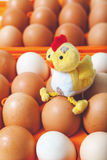 Żółty kurczaka obsiadanie na górze jajek w pomarańczowej tacy Zdjęcie Royalty Free