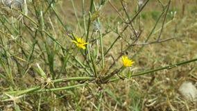 Żółty kwiat Obraz Royalty Free