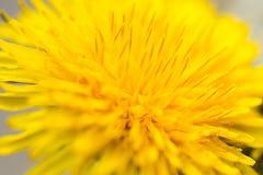 Żółty kwiat Zdjęcie Stock