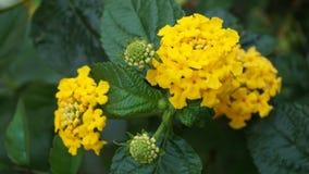 Żółty kwiat Obrazy Stock