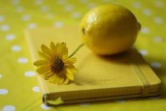 Żółty kwiat i cytryna Fotografia Royalty Free