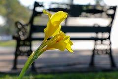 Żółty kwiat 102 i krzesło Obraz Royalty Free