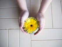 Żółty kwiat w wodnych szkłach z ręki mieniem Zdjęcia Royalty Free