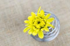 Żółty kwiat - wybrana ostrość Zdjęcie Royalty Free