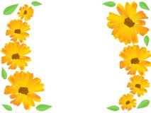 Żółty kwiatu wektoru tło royalty ilustracja
