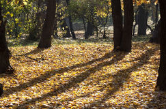 Żółty las Obrazy Stock