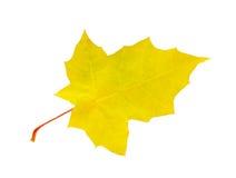 Żółty liść zdjęcie stock