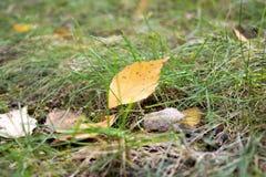 Żółty liść Zdjęcie Royalty Free