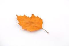Żółty liść jesień Obraz Royalty Free