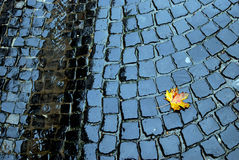 Żółty liść na bruku Obrazy Stock