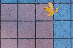 Żółty liść na podłoga obraz stock