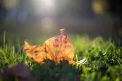 Żółty liść na trawie Zdjęcia Royalty Free