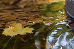 Żółty liść na wodzie Obrazy Stock