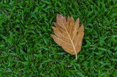 Żółty liść na zielonej trawie Obrazy Stock