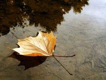 Żółty liść w kałuży Zdjęcia Royalty Free