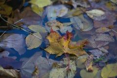 Żółty liść w kałuży Obrazy Royalty Free