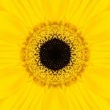 Żółty mandala kwiatu centrum Koncentryczny kalejdoskop obraz stock