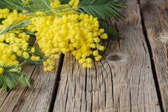 Żółty mimoza bukiet na nieociosanym drewno stole Fotografia Royalty Free