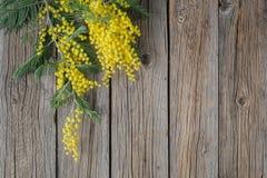 Żółty mimoza bukiet na nieociosanym drewno stole Fotografia Stock