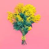 Żółty mimoza bukiet na różowym tle Obraz Stock