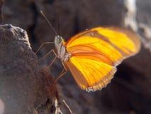 Żółty motyli szczegół Obrazy Royalty Free