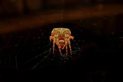 Żółty ogromny pająk zdjęcie stock