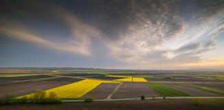 Żółty oilseed gwałta pole pod błękitnym jaskrawym niebem Zdjęcia Stock