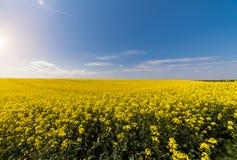 Żółty oilseed gwałta pole pod błękitnym jaskrawym niebem Fotografia Stock