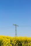 Żółty oilseed gwałta pole z pilonem w tle Obraz Stock
