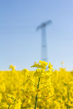 Żółty oilseed gwałta pole z pilonem w tle Zdjęcie Stock
