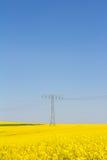 Żółty oilseed gwałta pole z pilonem w tle Obrazy Royalty Free
