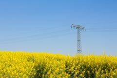 Żółty oilseed gwałta pole z pilonem w tle Fotografia Stock