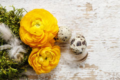 Żółty perski jaskier kwitnie na drewnianym backgrou (ranunculus) Fotografia Stock