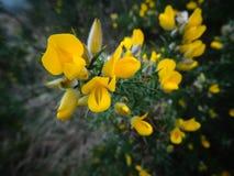 Żółty pluśnięcie Obrazy Stock