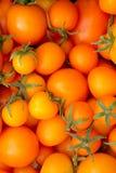 Żółty pomidoru tło Obraz Stock