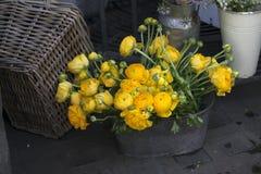 Żółty Ranunculus Zdjęcia Royalty Free