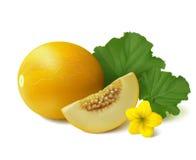 Żółty round melon na białym tle Zdjęcia Royalty Free
