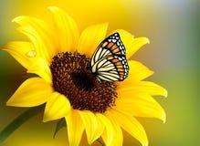 Żółty słonecznik z motylem Zdjęcia Stock