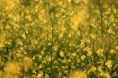 Żółty spokojna Obraz Royalty Free