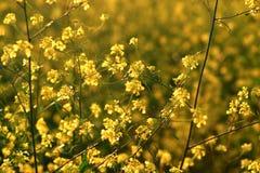 Żółty spokojna Fotografia Royalty Free