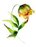 Żółty tulipanu kwiat Fotografia Royalty Free