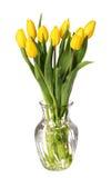 Żółty tulipanu kwiat odizolowywający na bielu Obraz Royalty Free