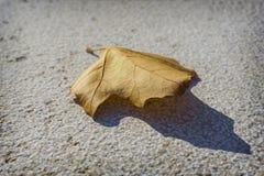Żółty ulistnienie na betonowym podłogowym tle Fotografia Royalty Free